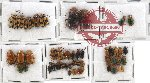 Scientific lot no. 108 Chrysomelidae (46 pcs)