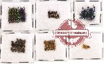 Scientific lot no. 120 Chrysomelidae (52 pcs)