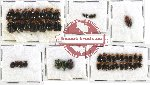 Scientific lot no. 132 Chrysomelidae (48 pcs)