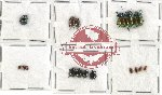Scientific lot no. 128 Chrysomelidae (17 pcs)