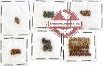Scientific lot no. 80 Chrysomelidae (71 pcs)