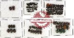 Scientific lot no. 106 Chrysomelidae (148 pcs)