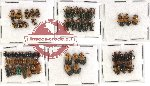 Scientific lot no. 146 Chrysomelidae (58 pcs)