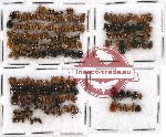 Scientific lot no. 102 Chrysomelidae (188 pcs)