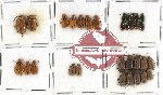 Scientific lot no. 119 Chrysomelidae (329 pcs)