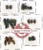 Scientific lot no. 139 Chrysomelidae (30 pcs)