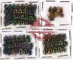 Scientific lot no. 150 Chrysomelidae (74 pcs)