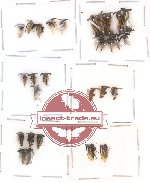 Scientific lot no. 1 Hemiptera (A, A2) (32 pcs)
