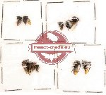 Scientific lot no. 2 Hemiptera (A, A-, A2) (11 pcs)