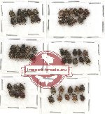 Scientific lot no. 14 Valginae (58 pcs)