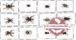 Scientific lot no. 185 Curculionidae (12 pcs)