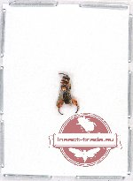 Scientific lot no. 72A Hymenoptera (1 pc A2)