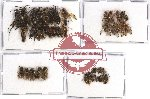 Scientific lot no. 100A Hymenoptera (45 pcs - 8 pcs A2)