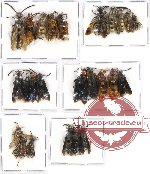 Scientific lot no. 77A Hymenoptera (23 pcs A-, A2)