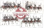 Scientific lot no. 22 Curculionidae (A2) (19 pcs)