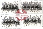 Scientific lot no. 26 Curculionidae (20 pcs)