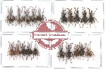 Scientific lot no. 28 Curculionidae (20 pcs)