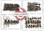 Scientific lot no. 34 Curculionidae (79 pcs)