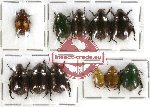Scientific lot no. 51 Rutelinae (10 pcs)