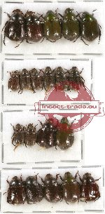 Scientific lot no. 49 Rutelinae (20 pcs - 4 pcs A2)