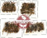 Scientific lot no. 105 Hymenoptera (26 pcs A, A-, A2)