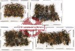 Scientific lot no. 102 Hymenoptera (35 pcs - 10 pcs A2)