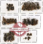 Scientific lot no. 89 Hymenoptera (39 pcs)