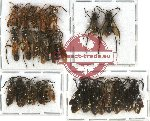 Scientific lot no. 87 Hymenoptera (22 pcs A-, A2)