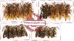 Scientific lot no. 103 Hymenoptera (21 pcs - 6 pcs A2)