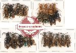 Scientific lot no. 86 Hymenoptera (23 pcs A-, A2)