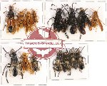 Scientific lot no. 88 Hymenoptera (15 pcs A-, A2)