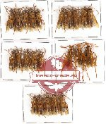 Scientific lot no. 82 Hymenoptera (23 pcs)