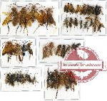 Scientific lot no. 110 Hymenoptera (49 pcs A, A-, A2)