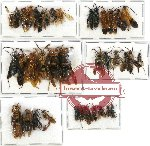 Scientific lot no. 108 Hymenoptera (39 pcs A, A-, A2)