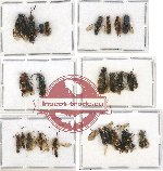 Scientific lot no. 117 Hymenoptera (25 pcs A, A-, A2)