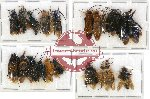 Scientific lot no. 116 Hymenoptera (20 pcs - 6 pcs A2)