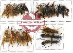 Scientific lot no. 109 Hymenoptera (18 pcs A, A-, A2)
