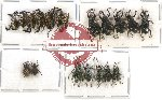 Scientific lot no. 226 Curculionidae (19 pcs)