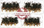 Scientific lot no. 84 Hymenoptera (20 pcs)