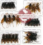 Scientific lot no. 106 Hymenoptera (23 pcs A, A2)