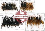 Scientific lot no. 90 Hymenoptera (20 pcs)