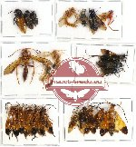 Scientific lot no. 115 Hymenoptera (22 pcs A, A-, A2)