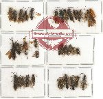 Scientific lot no. 118 Hymenoptera (36 pcs)