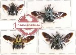 Scientific lot no. 120 Hymenoptera (Xylocopa spp.) (4 pcs A-, A)