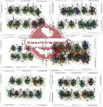 Scientific lot no. 175 Chrysomelidae (57 pcs A, A-, A2)