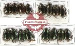 Scientific lot no. 101 Rutelinae (16 pcs)