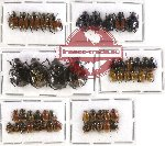 Scientific lot no. 105 Rutelinae (50 pcs)