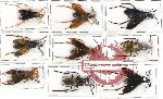 Scientific lot no. 138 Hymenoptera (9 pcs A, A-, A2)
