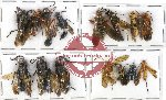 Scientific lot no. 143 Hymenoptera (15 pcs A, A-, A2)