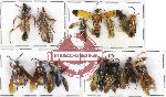Scientific lot no. 139 Hymenoptera (14 pcs A, A-, A2)
